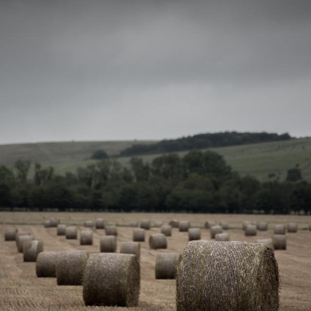 """Round Straw Bales Overcast (2)"" stock image"