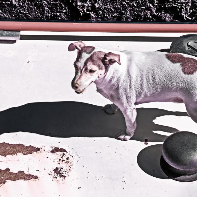 """""""Narrow Boat Dog"""" stock image"""