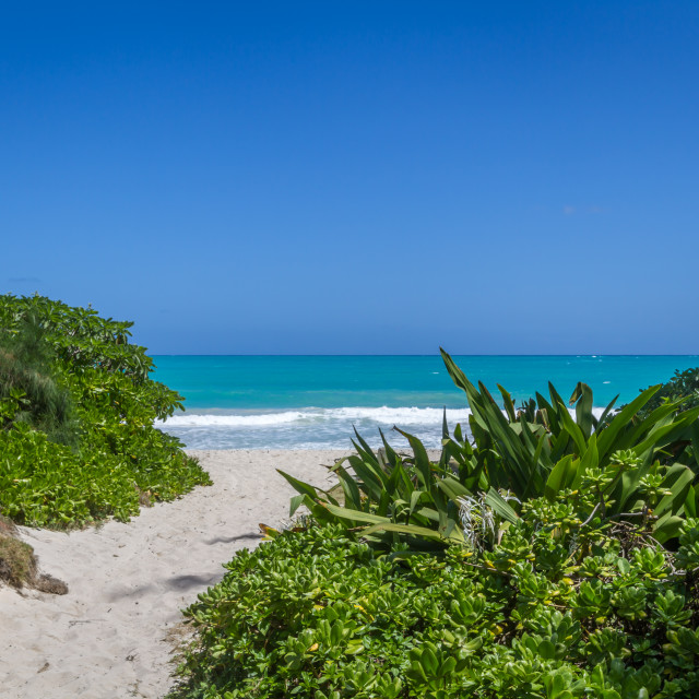 """Hawaii Beach pathway"" stock image"