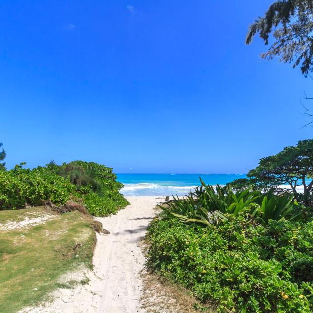 """Hawaii Beach path"" stock image"
