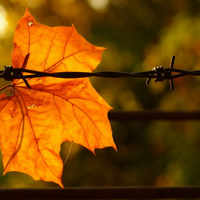 """Barbed Autumn"" stock image"
