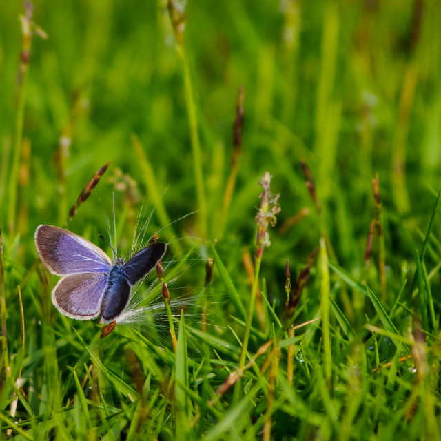 """Butterfly on a wild flower's seed"" stock image"