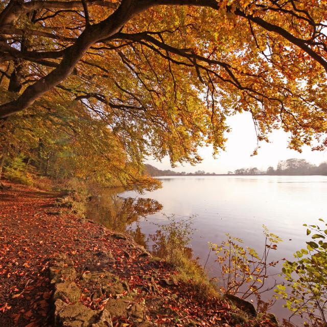 """""""Knypersley Reservoir, Stoke-on-Trent"""" stock image"""