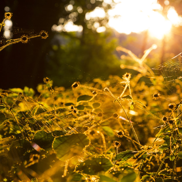 """Autumn Woodland Cobweb Sunset"" stock image"