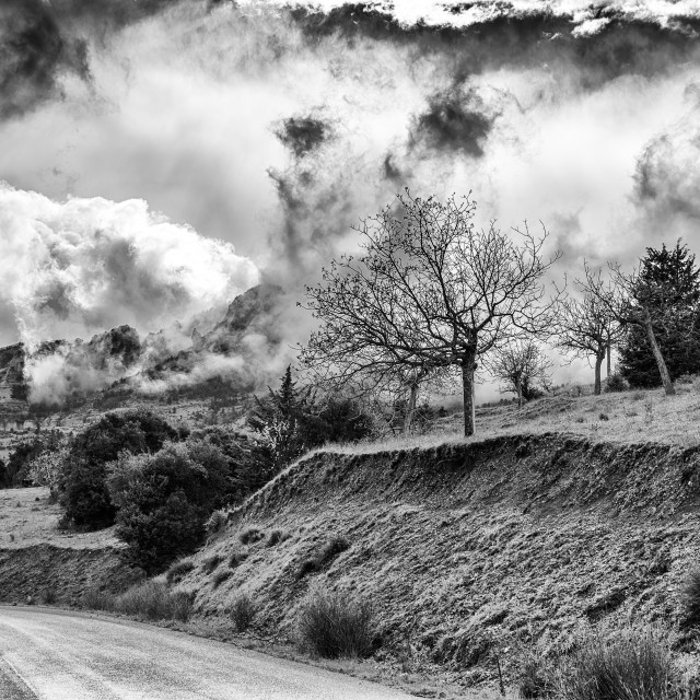 """""""Winter BW photo of cloudy dramatic sky with trees"""" stock image"""