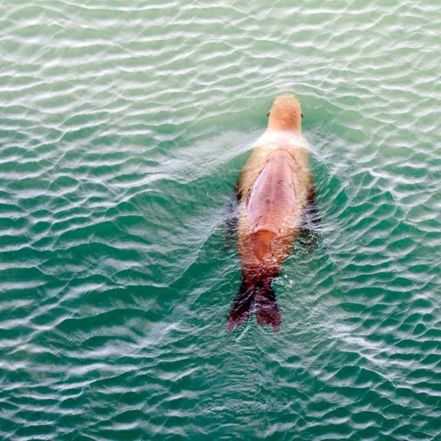 """California Sea Lion"" stock image"