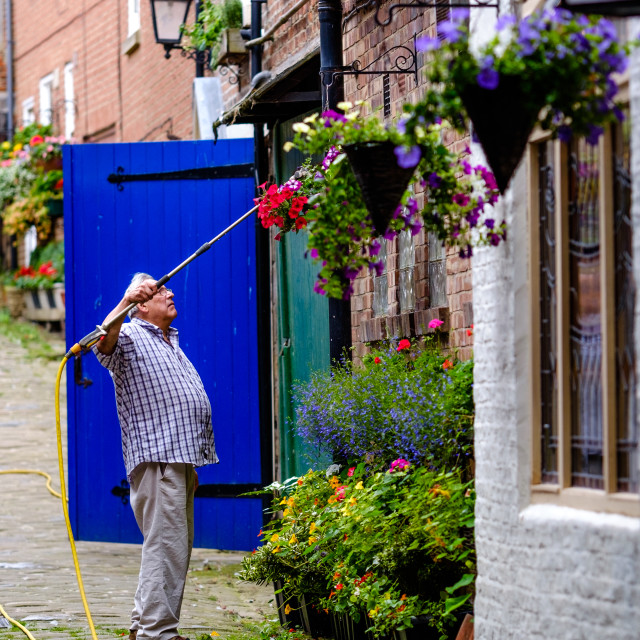 """Man watering hanging baskets wide"" stock image"