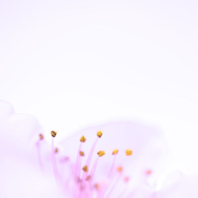 """""""Flower Heaven"""" stock image"""