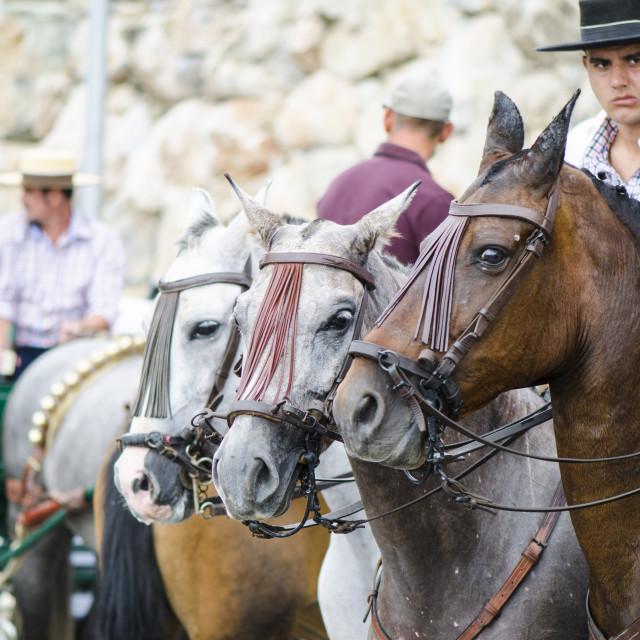 """""""Horses at feria"""" stock image"""