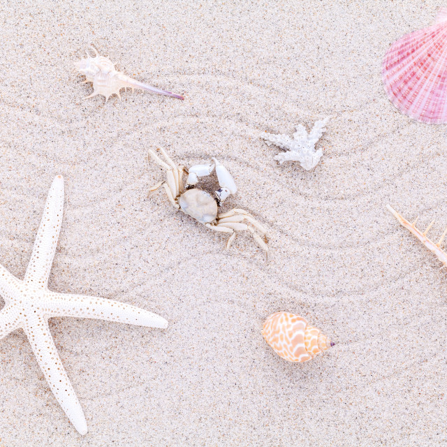 """Sea shells,starfish and crab on beach sand for summer and beach concept."" stock image"