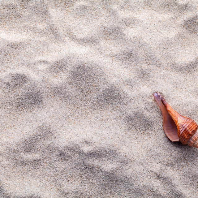 """Sea shells,starfish and crab on beach sand for summer and beach concept. Studio shot beach background."" stock image"