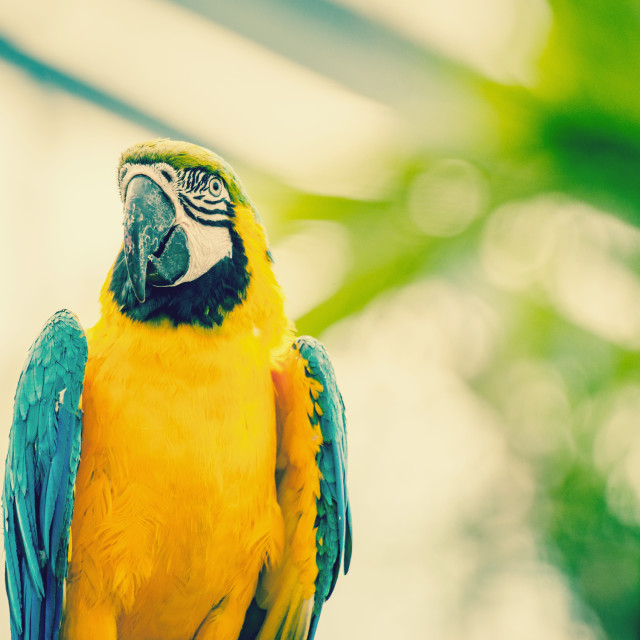 """""""Beautiful blue and yellow macaw parrot"""" stock image"""