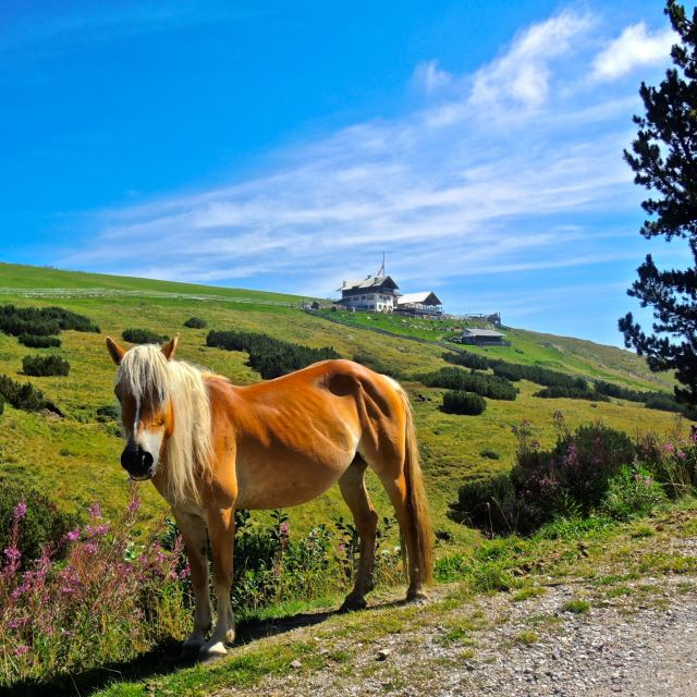 """""""Il cavallo e il rifugio"""" stock image"""