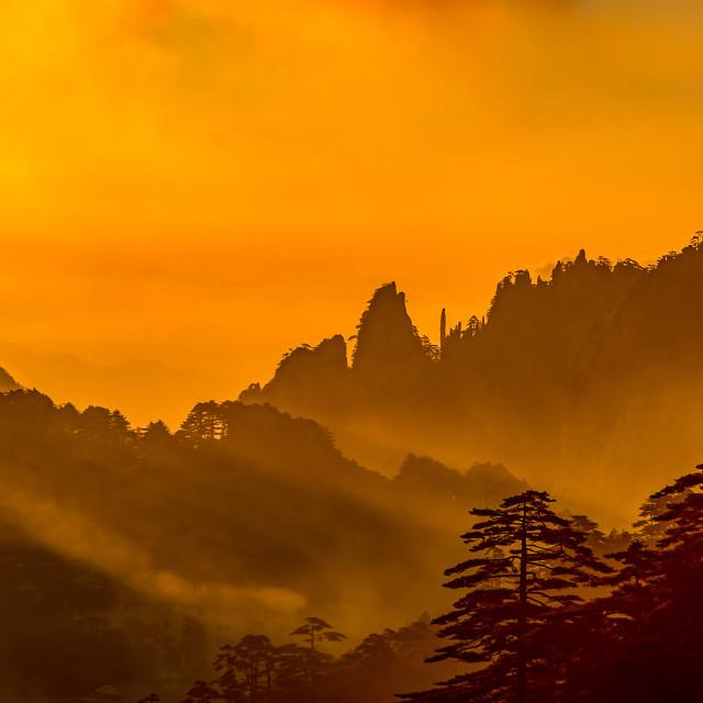 """Huangshan gold"" stock image"