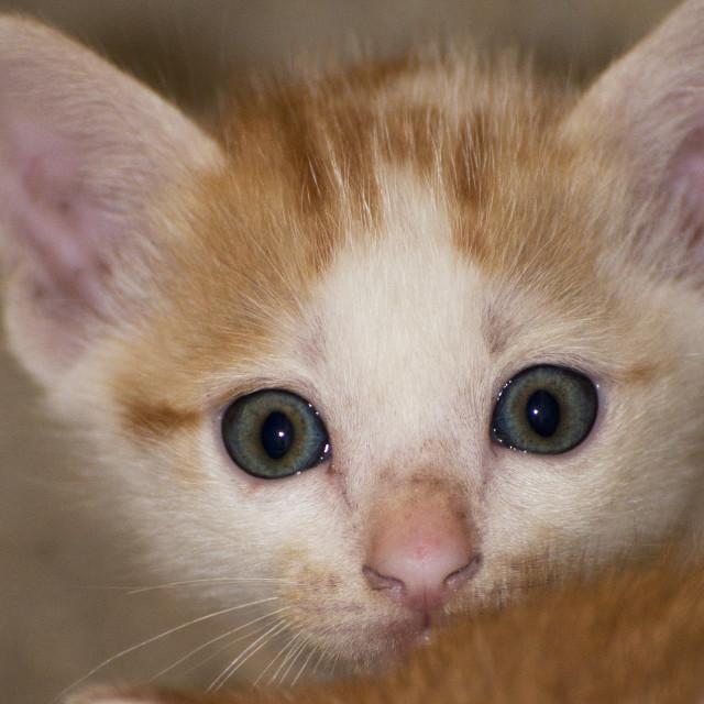"""""""Feral Kitten"""" stock image"""