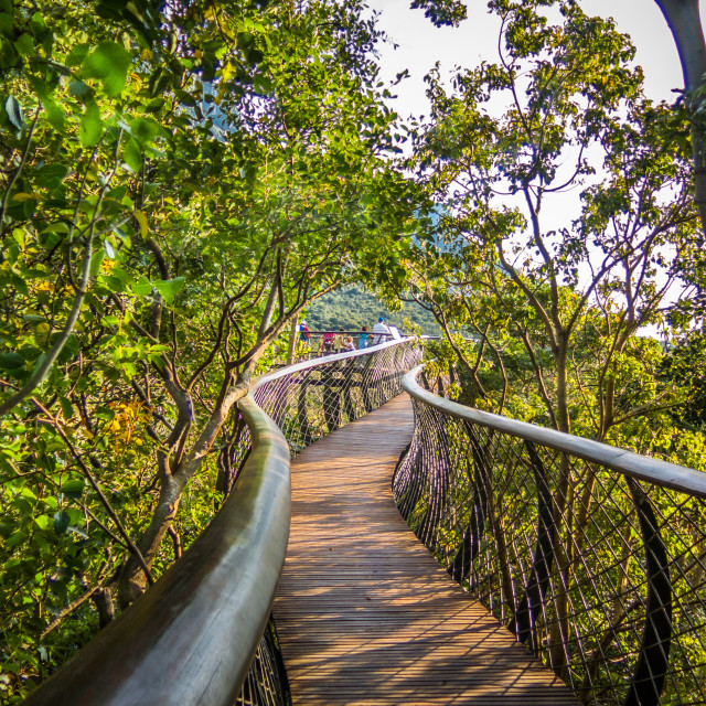 """Kirstenbosch Botanical Gardens, Cape Town"" stock image"