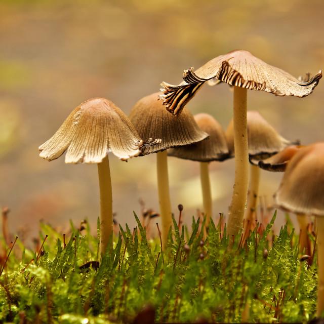"""Mushroom Family"" stock image"