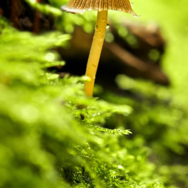 """""""Single mushroom"""" stock image"""