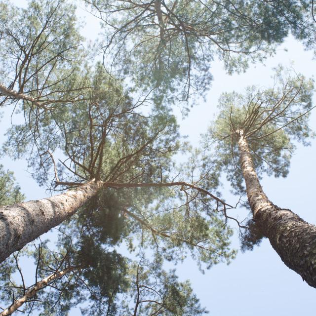 """Tree Brothers"" stock image"