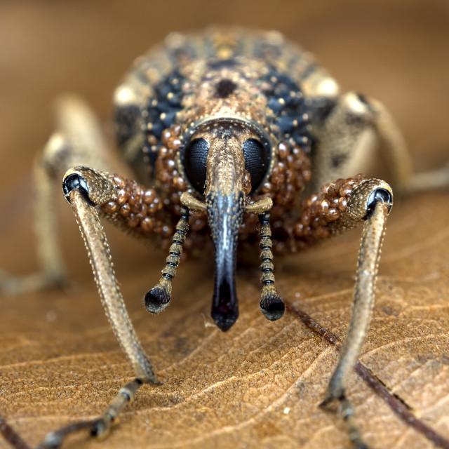 """Weevil & Mites"" stock image"