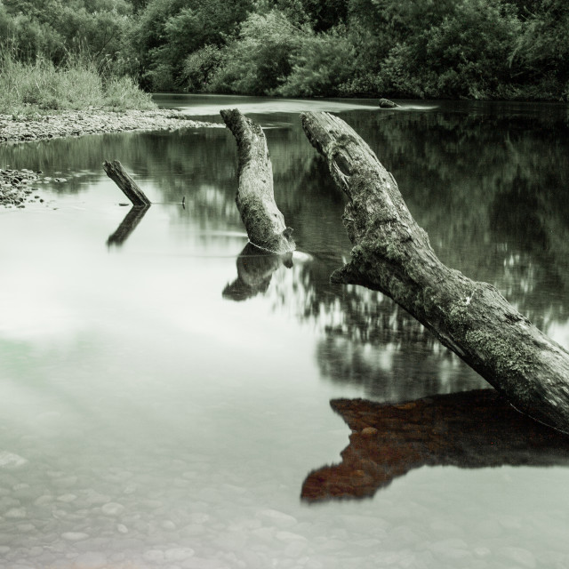 """Tree claimed by river"" stock image"