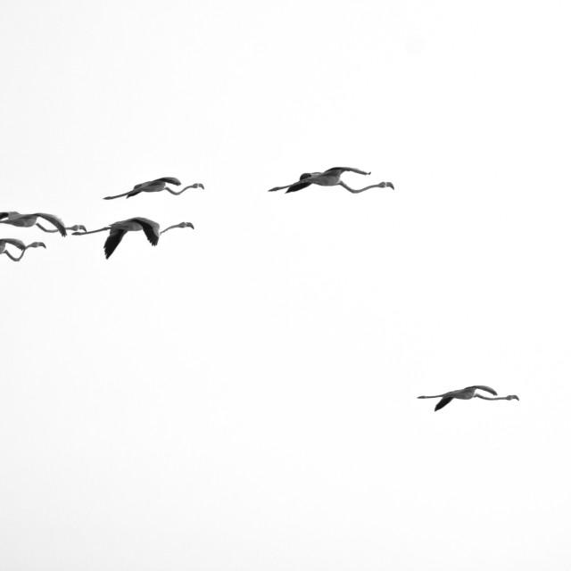"""flock"" stock image"