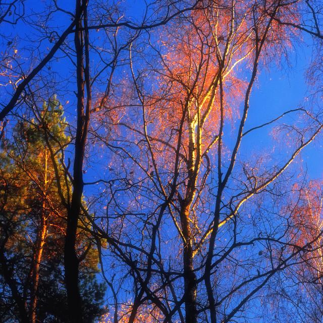"""""""Golden Autumn Flies Away"""" stock image"""