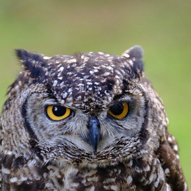 """""""Owl - Eule"""" stock image"""