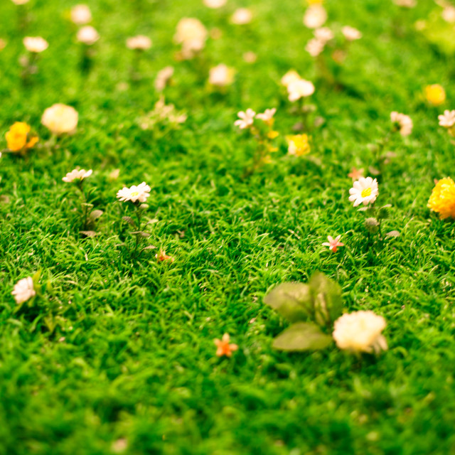 """Spring flowers on grass"" stock image"