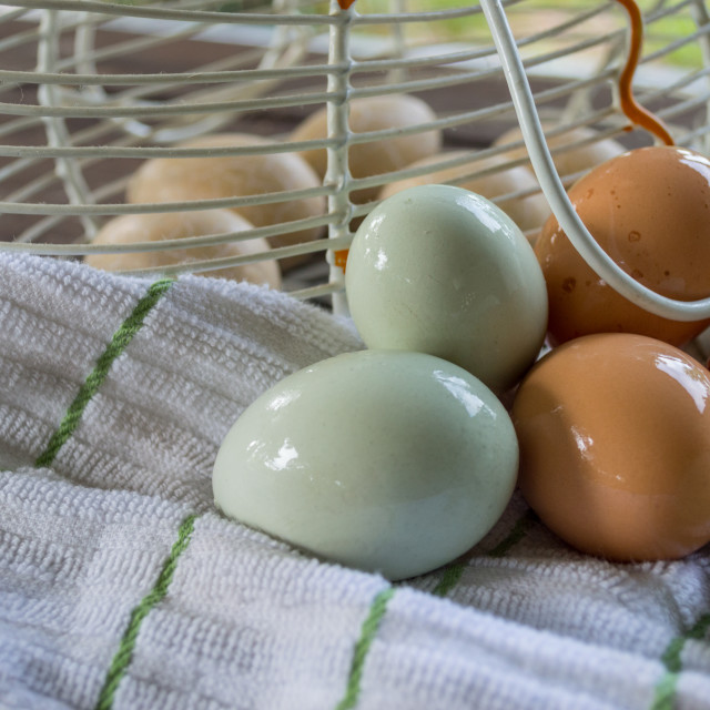 """Fresh Farm Eggs"" stock image"