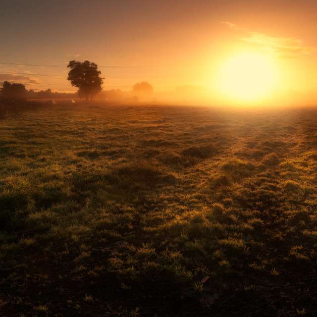 """Sunrise on a Field"" stock image"