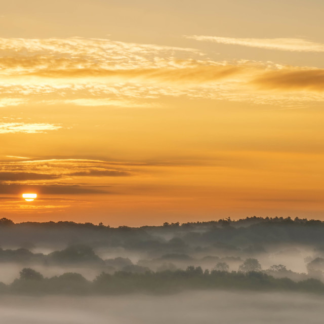 """New Forest Dawn at Ogdens Purlieu"" stock image"