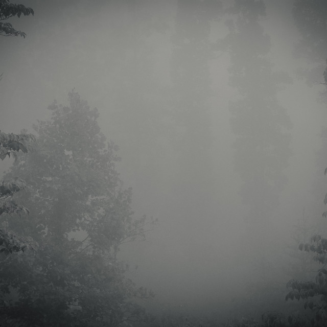 """Thick Mountain Fog"" stock image"