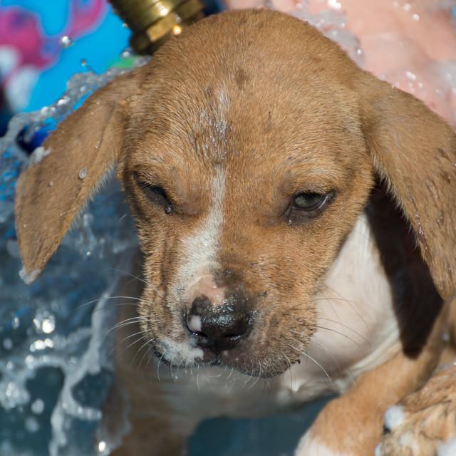 """Wet Puppy"" stock image"
