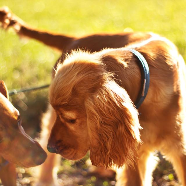 """Beautiful dogs"" stock image"