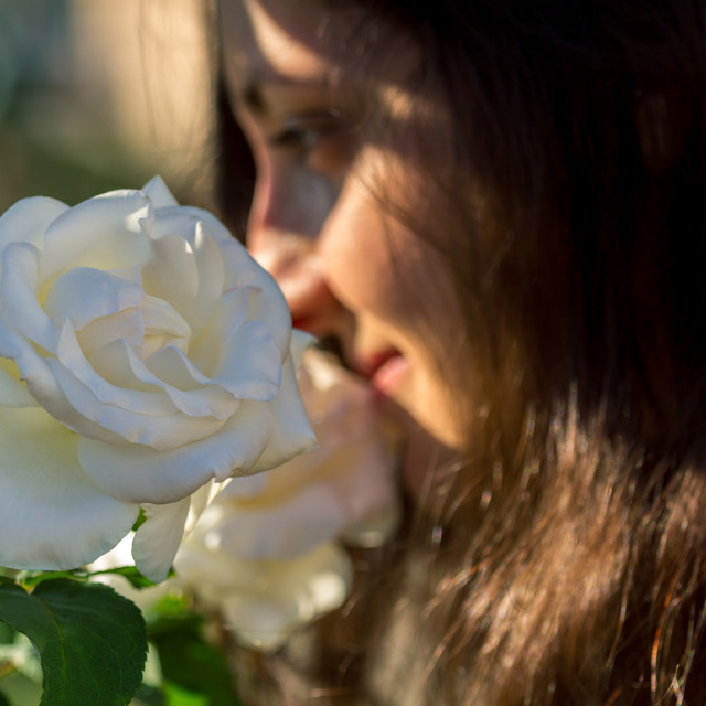 """""""scent of white rose"""" stock image"""