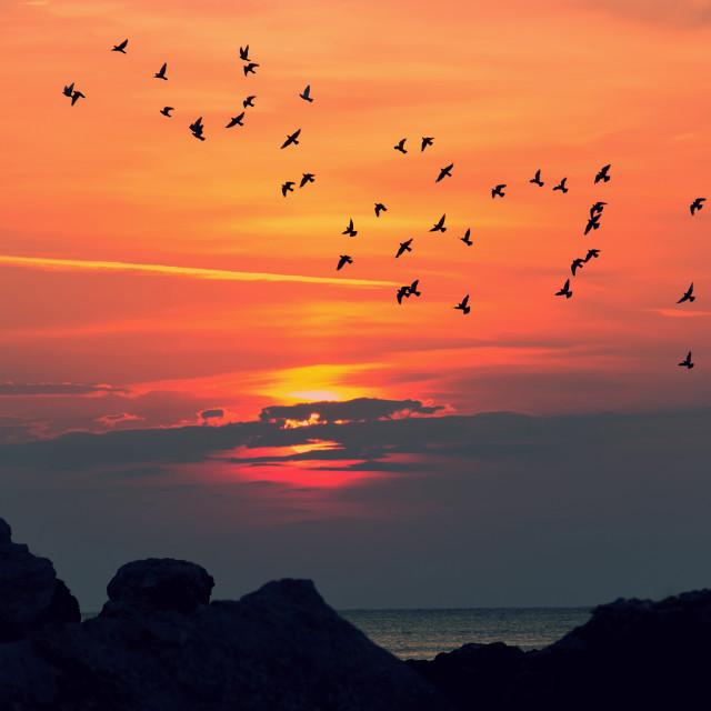 """Sunrise at sea"" stock image"