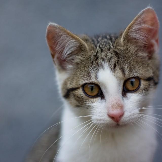 """Portrait of small kitten"" stock image"