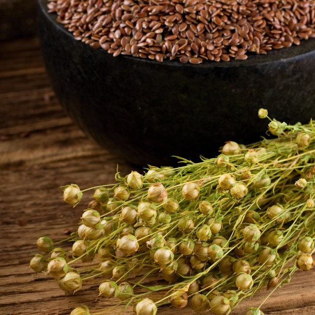 """""""Harvested flax in front of marble mortar"""" stock image"""