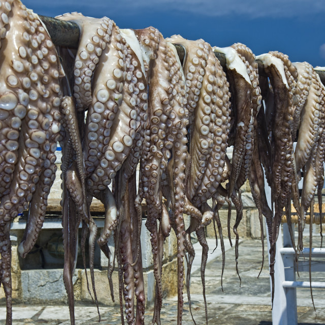 """Octopus fished in Naxos island"" stock image"