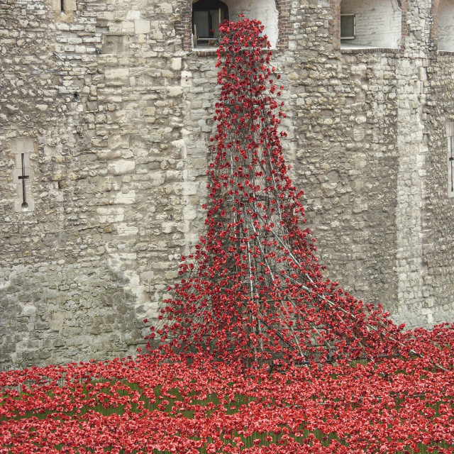 """Memorial Poppies"" stock image"