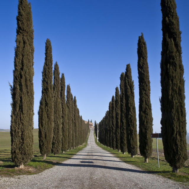 """Roads of Tuscany (Val d'orcia Italy)"" stock image"