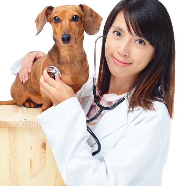 """Female veterinarian with dachshund dog"" stock image"