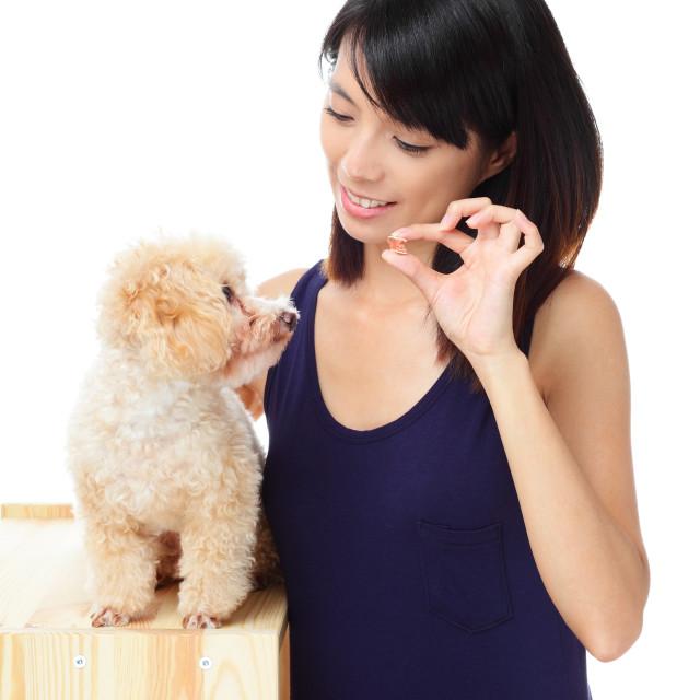 """""""Asian woman feeding poodle dog"""" stock image"""
