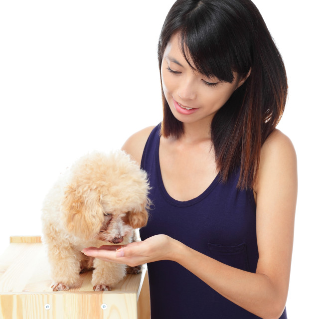 """""""Asian woman with poodle dog"""" stock image"""