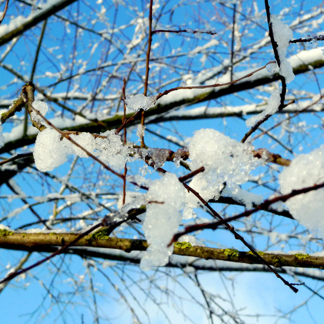 """""""Branches covered with ice and snow against a blue sky"""" stock image"""