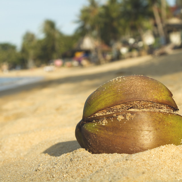 """""""Close up of a coconut on the beach"""" stock image"""