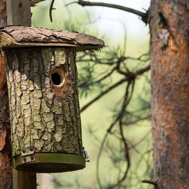 """""""Shelter for birds"""" stock image"""