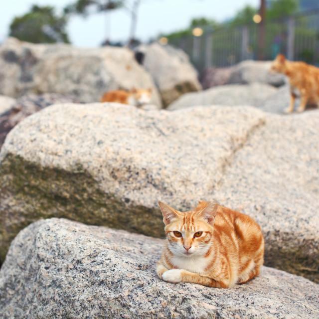 """Street cat lying on the stone"" stock image"