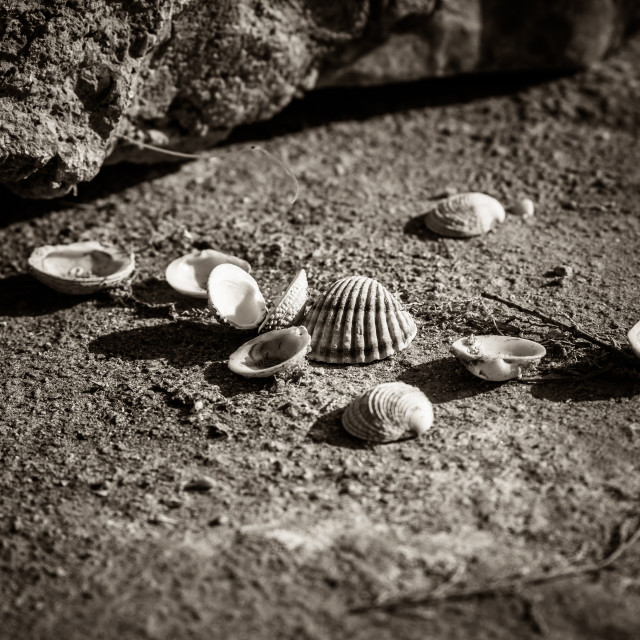 """Shells"" stock image"